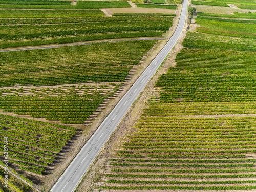 Foto Murales Landstraße durch die Weinberge