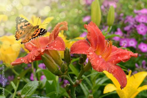 Sticker Schmetterling 469