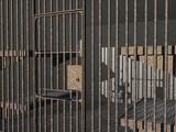 Gefängniszelle mit Gitterstäben - 221978991