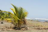 Palme am Strand - 221985749
