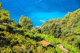 View of the tropical plants with the blue Mediterranean Sea in the a background on a bright sunny day. - 221991982