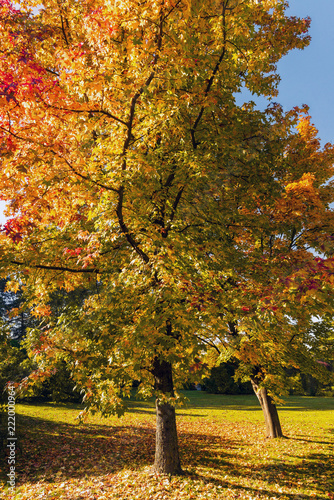 Leinwandbild Motiv Autumn in the park-beautifull colored trees in the evening sun