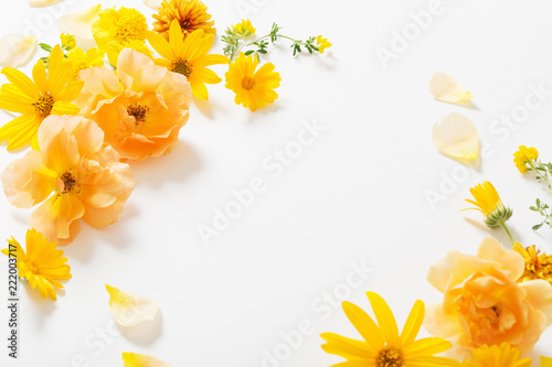yellow  flowers on white background - 222003717