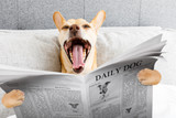 yawning dog in bed