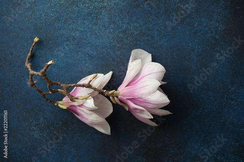 Foto Murales Branch of iwo magnolia flowers