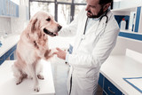 My patient. Competent doctor standing in semi position and holding paw of his patient while having stethoscope on the neck
