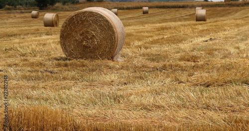 Foto Murales Panorama con campi dorati