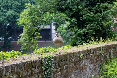 Bird on stone wall - 222027968