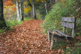 Wooden bench on forest alley with autumn leaves - 222029927