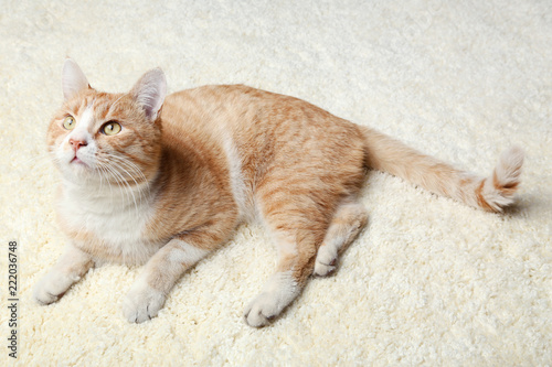 Ginger cat lying on beige carpet - 222036748