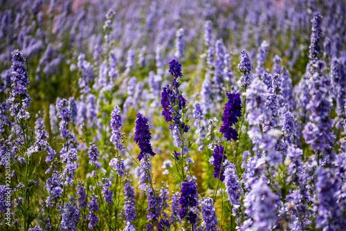 Confetti flowers - 222038588