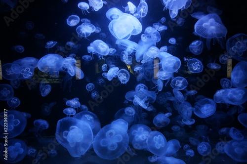 Fototapeta jellyfish dark wate