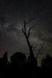 Gloomy tree against the starry sky at night - 222041129
