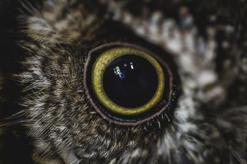 EYE OF OWL IN MACRO PHOTOGRAPHY