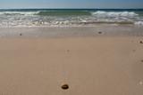 A cowrie shell on sandy Woorim Beach, Bribie Island, Queensland, Australia, with breaking waves in the background. - 222073131