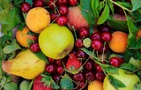 apricot apples cherries and more fruits