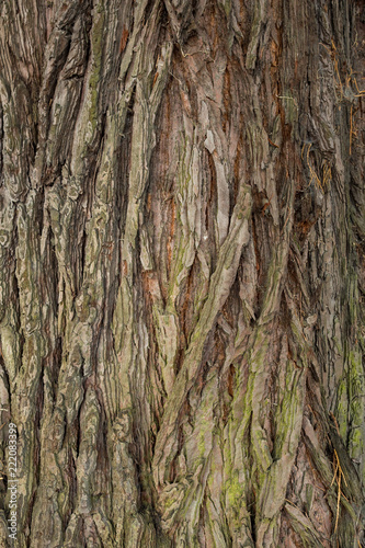rough tree trunk surface texture background - 222083399