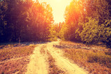 Rural landscape in the evening. Dirt road in the forest at sunset - 222094532