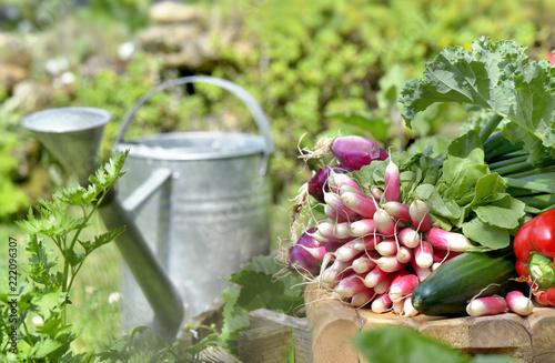 fresh vegetables put on a plank  in garden with a metal watering can  - 222096307