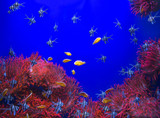 Red sea anemone in a dark blue water and colorful fish of aquarium. Marine Life background. - 222096977