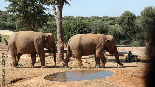 Fototapeta zoo safari