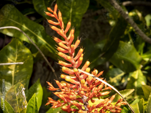 tropical flower - 222105560
