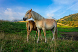 Mum horse with the little one in the mountain pastures - 222109565