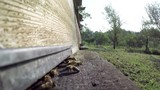 Bee at hive flying in apiary, slow motion footage  - 222114976