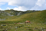 horses in the mountains of italy - 222125750