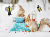 Two squirrels and blueberries eat nuts and cups in the winter forest.  - 222138198
