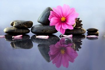 Black spa stones and pink cosmos flower.