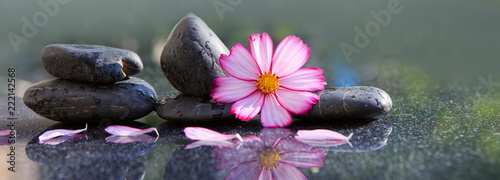 Leinwanddruck Bild Black spa stones and pink cosmos flower isolated on green.