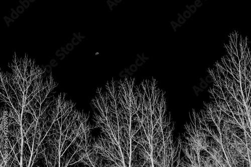 drzewa-i-ksiezyc-w-zimowe-popoludnie-w-czerni-i-bieli
