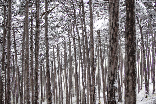snow covered forest,winter landscape