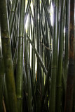 Green Close Up Wet Bamboo Tree Trunks