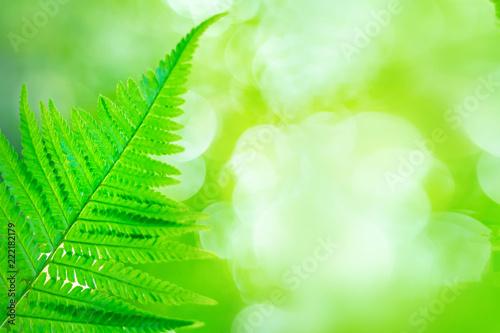 beautiful fern leaf on blurred forest background - 222182179