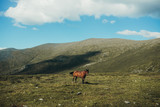 Wild horses in mountains - 222187370