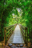 bridge in bamboo forest © Michael