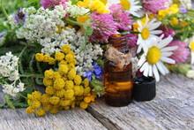 "Постер, картина, фотообои ""Bouquet of meadow medicinal plants of flowers"""