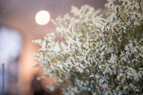 Beautiful white statice flower buy photos ap images detailview beautiful white statice flower mightylinksfo