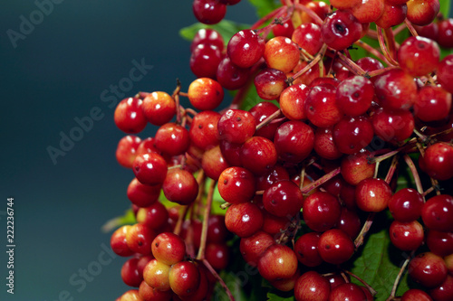 Foto Murales a bunch of autumn berries in a stalemate vase