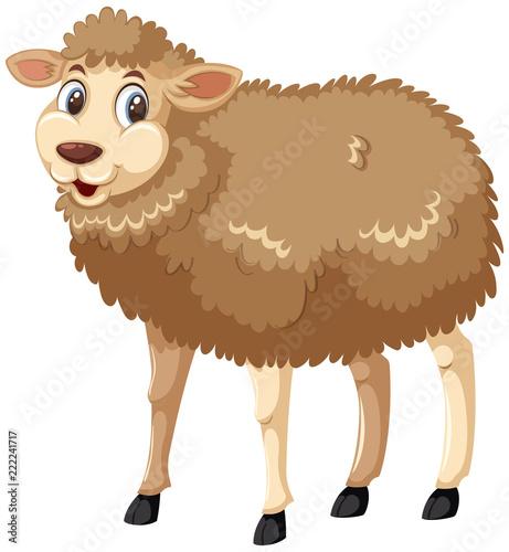 Smiley owiec na białym tle