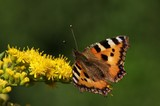 Colorful butterfly sitting on leaves and flowers collecting nectar