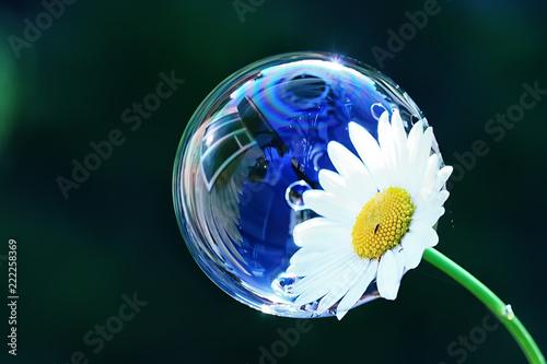 soap bubble petal / concept nature air purity, air bubble on a flower petal