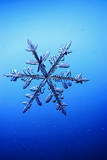 Snowflakes on a blue background - 222258545
