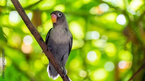 Fototapeta Cute parrot in tropical forest. Maldives. Wild nature.