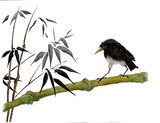 On the watercolor funny starling bird on a branch of bamboo. Illustration executed in traditional chinese style, isolated on white background.