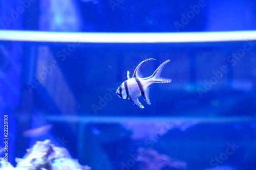 Leinwandbild Motiv white fish