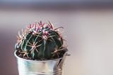 Cactus dans un petit pot en métal - 222284997
