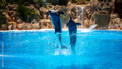 Fototapeta Show of beautiful dolphin jumps in zoo pool.